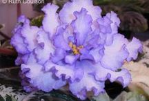 African violets / by Retta T