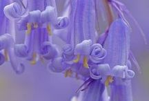 Flowers/Plants..#2 / by Retta T