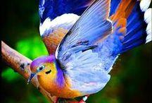 oiseaux. Birds. / by Dina Livingston