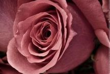 Colour Inspiration: It's Coming Up Roses / Roses are an endless source of colour inspiration for branding and web design