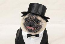 My Imaginary Well-Dressed Dog