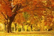 Fun of Fall / I love this season