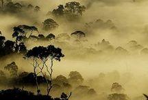 Natuur / landschap