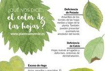 Green Infographics / Infografías de temática ecofriendly, medioambiental, ecológica
