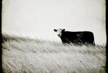 Farming Photos