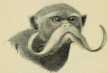 Illustrazioni naturalistiche.