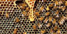 Jalea Real / La jalea real es una de las sustancias más completas creadas por la naturaleza, debido a sus propiedades y a la manera que la fabrican las abejas para su propia alimentación.   Robis te acerca los productos de Jalea Real. ¡No esperes más y cuida tu salud!