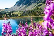 • ☼ Osez la montagne l'été ! ☼ • / Quel bonheur que de se rendre à la montagne pour savourer les belles journées ensoleillées de l'été ! Profitez de moments inoubliables dans ses lieux d'exception et de toute beauté.