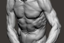Anatomy References / Anatomy references for artists