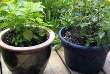 Gardening Stuff / by Janette Penelope