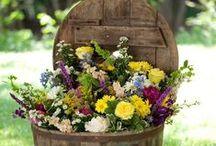 Garden / Ideas and inspirations for the garden