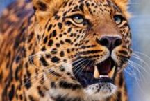 Animal Background Wallpapers HD