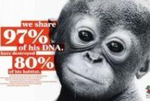 The Rainforest & Orangutans / When yo buy a pair of Monkeyglasses, we help support the endangered orangutans. redorangutangen.dk
