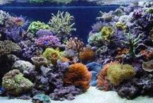 Amazing Aquarium Aquascapes