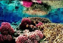 Coral Reefs / This board is to showcase beautiful coral reefs located all around the world!