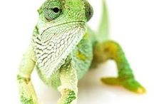 lizards, reptiles and others...