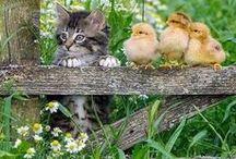 °love of animals...