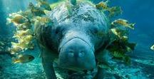 marine mammals...