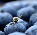 snails...