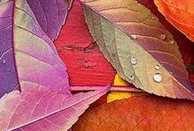color of leaves...