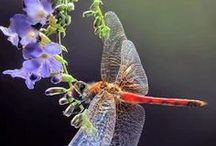 dragonfly and mantis...