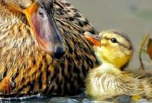 ANIMALS    WITH BABIES / INCLUDES BIRDS WITH BABIES AND ANIMALS OR BABIES ALONE OR JUST MOMMY AND ME