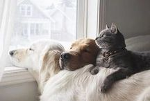 love of animals I. ...