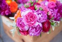 Kukkia - Flowers