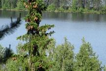 Koli National Park in Finland