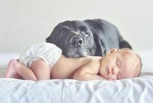 Des bébés et des animaux/ Babies and pets