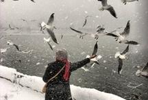 Winter Chills / by Merilee Hughes