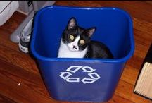 Animals Love to Recycle / Cute critters and recycling