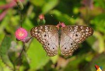 Fauna Colombiana / La faunca colombiana se caracteriza por su gran biodiversidad. Para ver más animales que puedes encontrar en Colombia, ingresa a http://www.viajaporcolombia.com/multimedia/imagenes/fauna.html