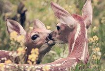 Dieren schattig!