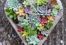 Gardens Inspirations