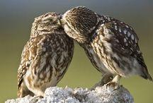 Linnut/Birds