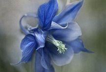 Sininen / Blue