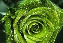 Vihreä / Green