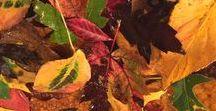 Autumn in Randolph County, Illinois / The browns, reds and golds of Autumn ... in Randolph County, Illinois. #randolphcountyil  http://www.edrandolphcounty.com