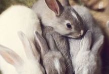 Bunnies / Oh, my! My heart is hopping around!