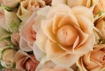 Spray Roses / Here are Spray Roses available at Stevens and Son Wholesale Florist