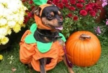Party Animals / Dress up your pets and take them trick-or-treating for Halloween, too! http://hallowmix.com