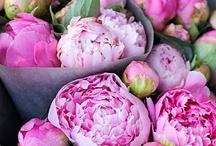 fleurs / flores / flowers / blumen