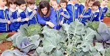 Huerto Ecológico ISP / L@s #alumnosISP cultivan y recolectan muchas de las frutas y verduras que consumen en el cole. ¡Menudos agricultores! ;)