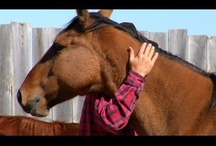 Equisports Massager - Horse Videos / http://horsemassagers.com/ / by Core Products