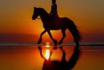 horses rule