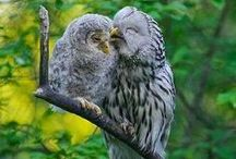 Owl stuff / Owl pics and anything else to do with Owls, the cutest birds of all!