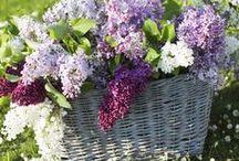 Flower bouquet - Spring