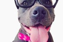 Pittie2020 Campaign / Change the way the way the world views pit bulls one lens at a time!