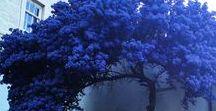 Nature/Plants